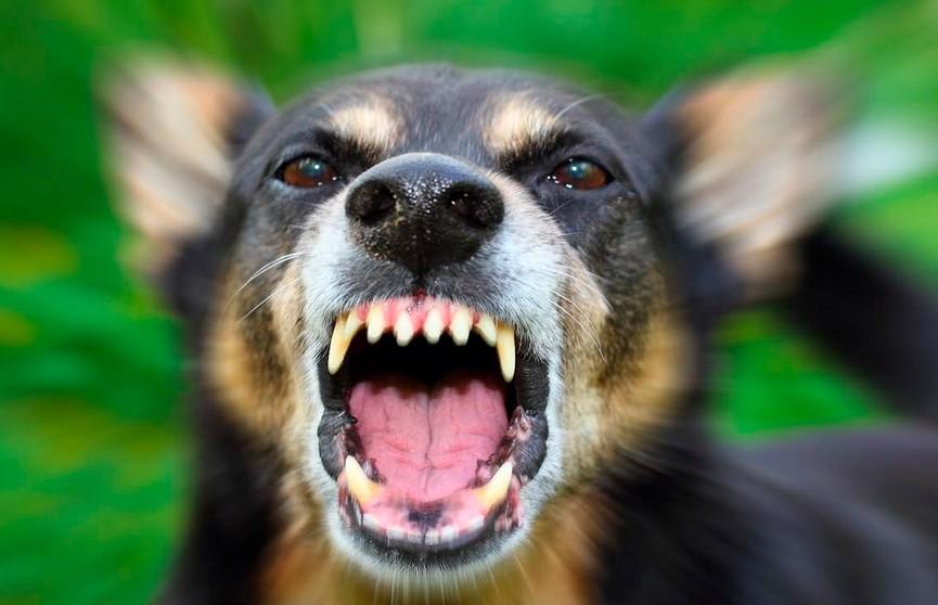Собака укусила годовалого ребёнка за голову в Полоцком районе