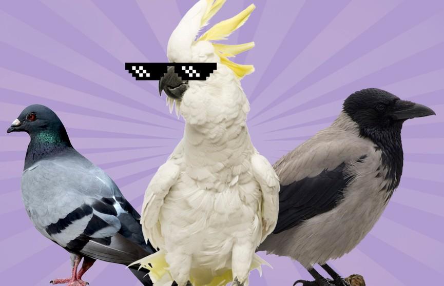 Какие птицы оказались самыми умными? Ни за что не отгадаете!