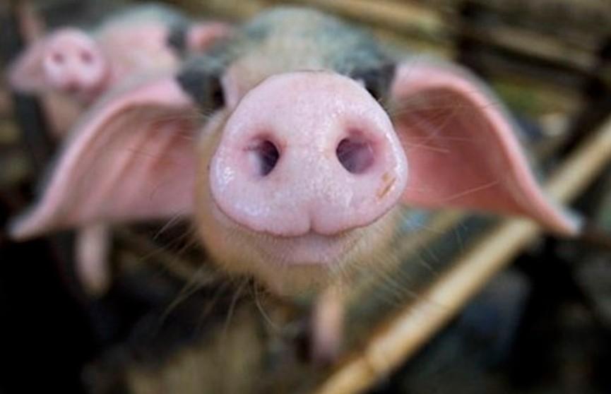 Беларусь ограничила ввоз мяса из китайской провинции Хэнань