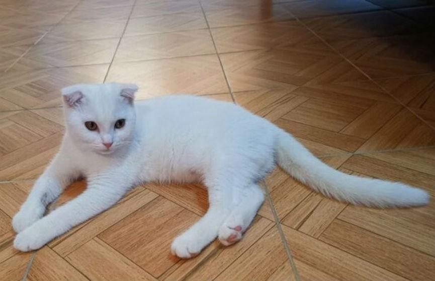 Женщина решила вылечить кота народным средством, но что-то пошло не так (ФОТО)