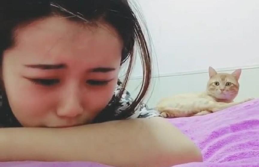 Кошка услышала, что хозяйка плачет, подошла к ней и начала успокаивать. Посмотрите, это удивительно! (ВИДЕО)