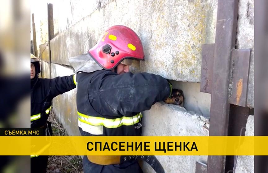 В Жлобине сотрудники МЧС спасли щенка