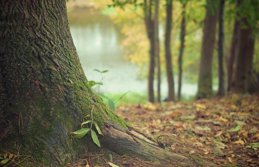В Гродно бывший муж отказался уезжать с дачи – и его привязали к дереву