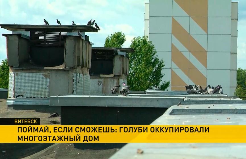 Голуби оккупировали технический этаж многоэтажки в Витебске