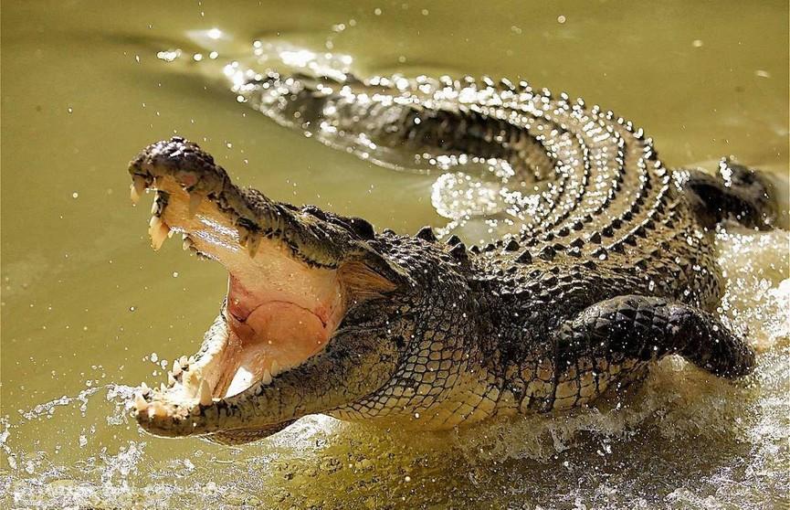 Крокодил убил купавшегося в реке мальчика на глазах у его друзей
