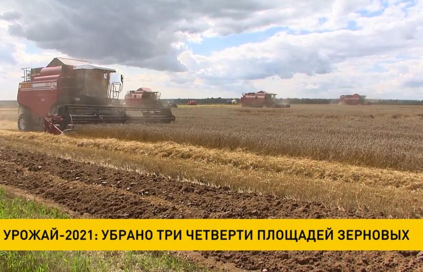 Урожай-2021: убрано 3/4 площадей зерновых