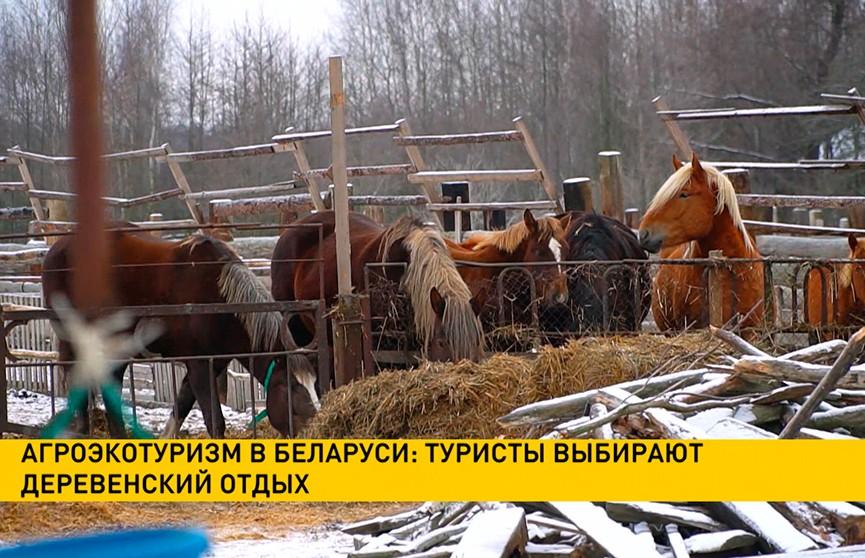 Агроэкотуризм в Беларуси: туристы выбирают деревенский отдых