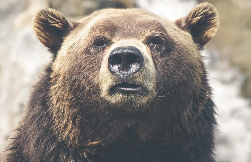 Неделю отстреливающегося от медведя мужчину спасли на Аляске