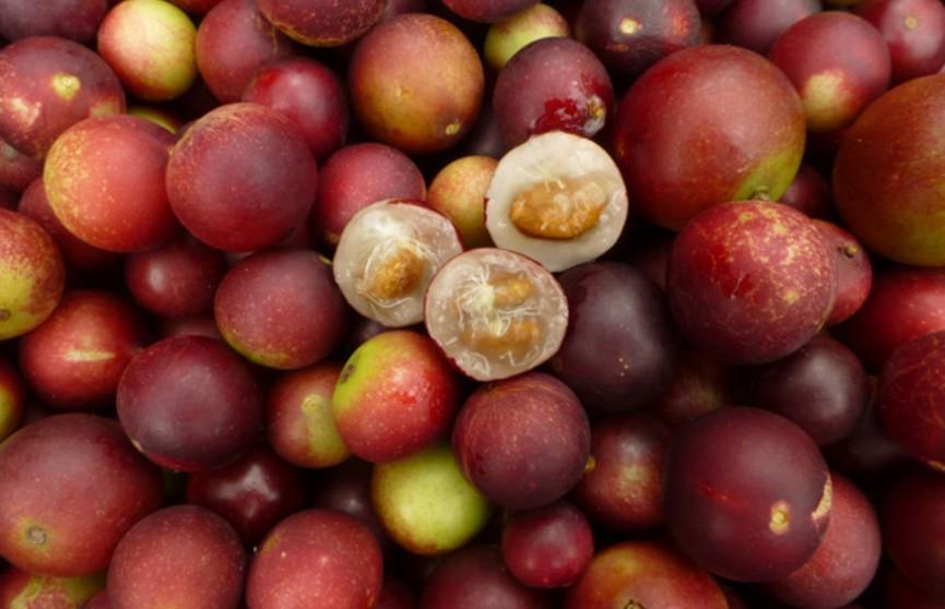 Идеальный фрукт для сжигания жира назвали исследователи