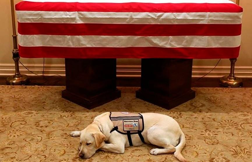 Трогательное фото: служебная собака Джорджа Буша-старшего грустила возле его гроба во время прощания с ним