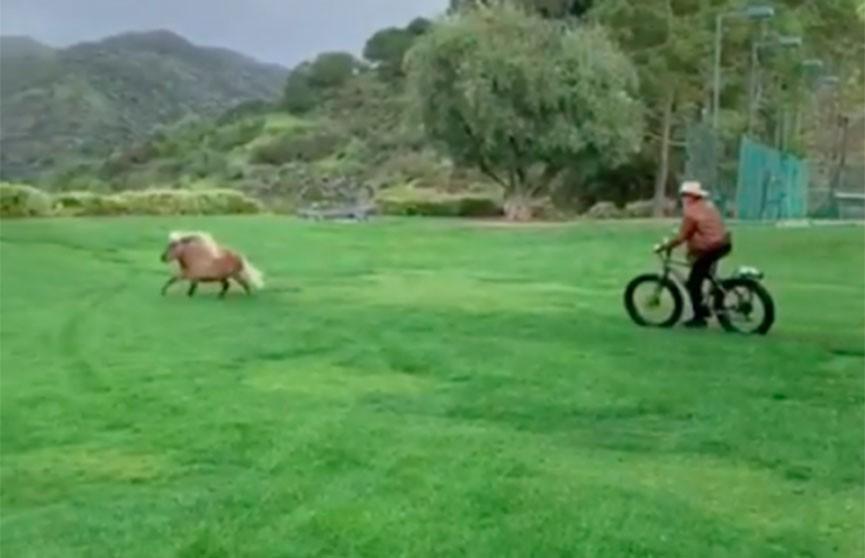 Шварценеггер тренирует своего пони, гоняясь за ним на байке (Видео)