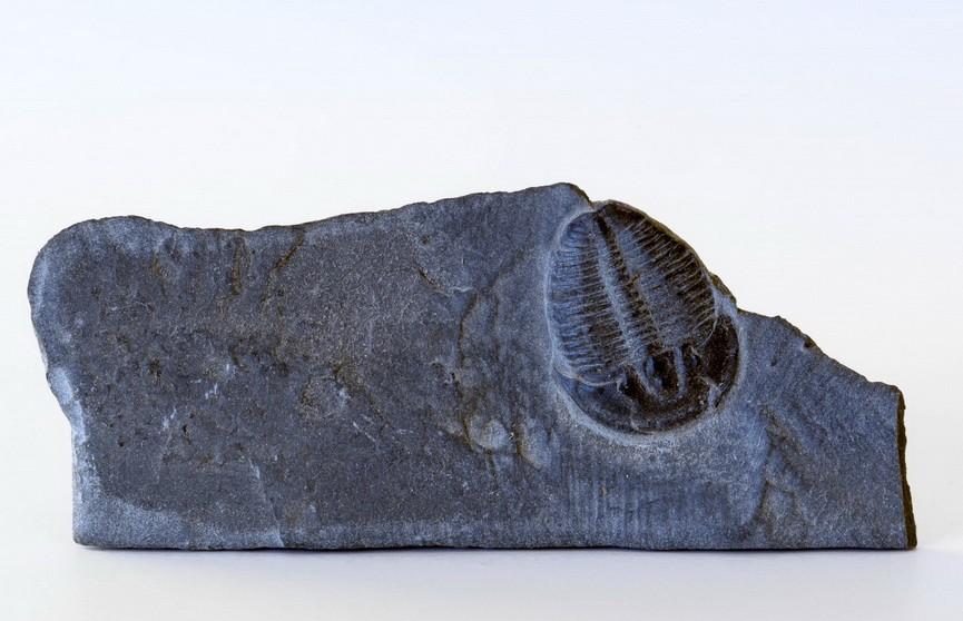 В России нашли следы самого древнего в мире животного