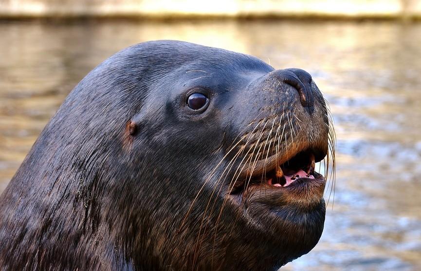 Запрыгнувший в лодку морской лев съел всю рыбу и попал на видео