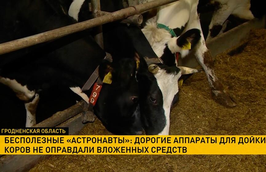 «Роботы-астронавты» стали проблемой для хозяйства Сморгонского района