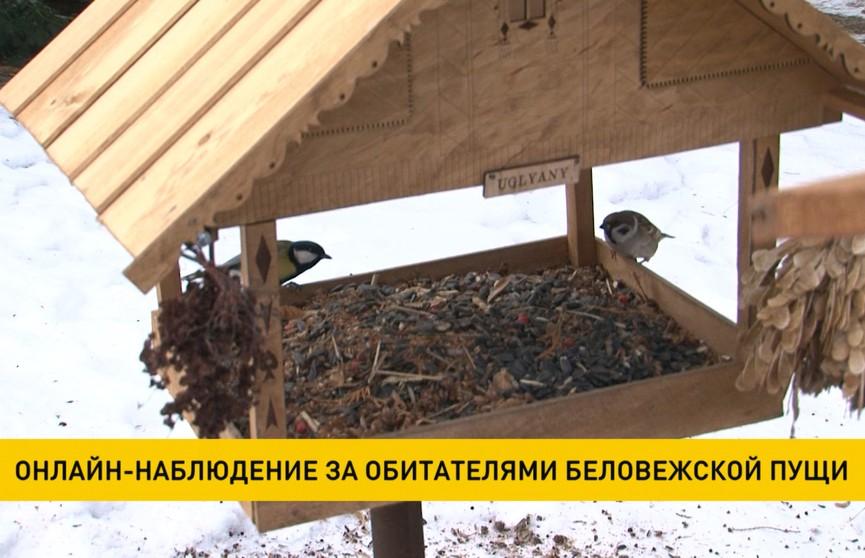 За зверями и птицами Беловежской пущи можно наблюдать онлайн