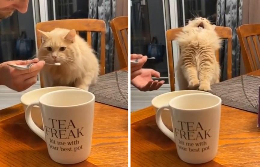 Неожиданная реакция кота, который попробовал мороженое, покорила Сеть (ВИДЕО)