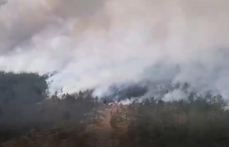 Вторые сутки спасатели борются с крупным пожаром на Ольманских болотах