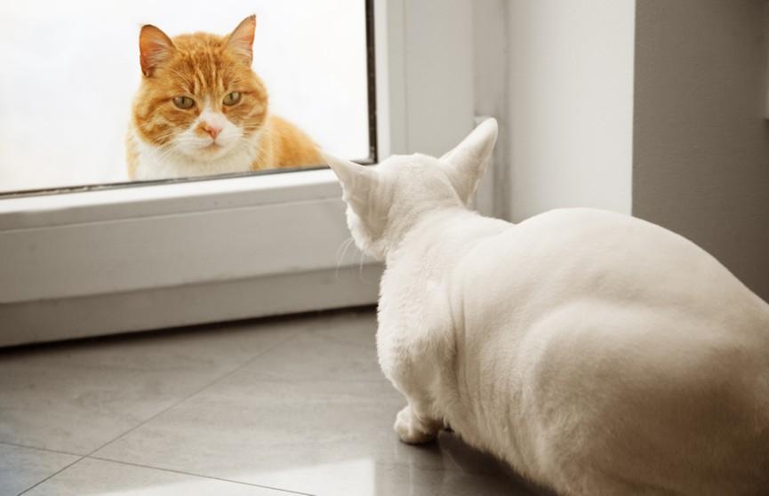 Кот собрался напасть на подругу странным способом. Посмотрите, нужны железные нервы! (ВИДЕО)