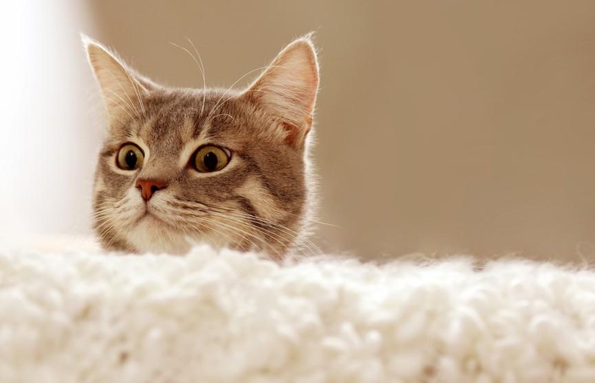 Кот попытался прыгнуть с мокрого пола на диван. Только посмотрите, что  у него получилось – 100% будете смеяться! (ВИДЕО)