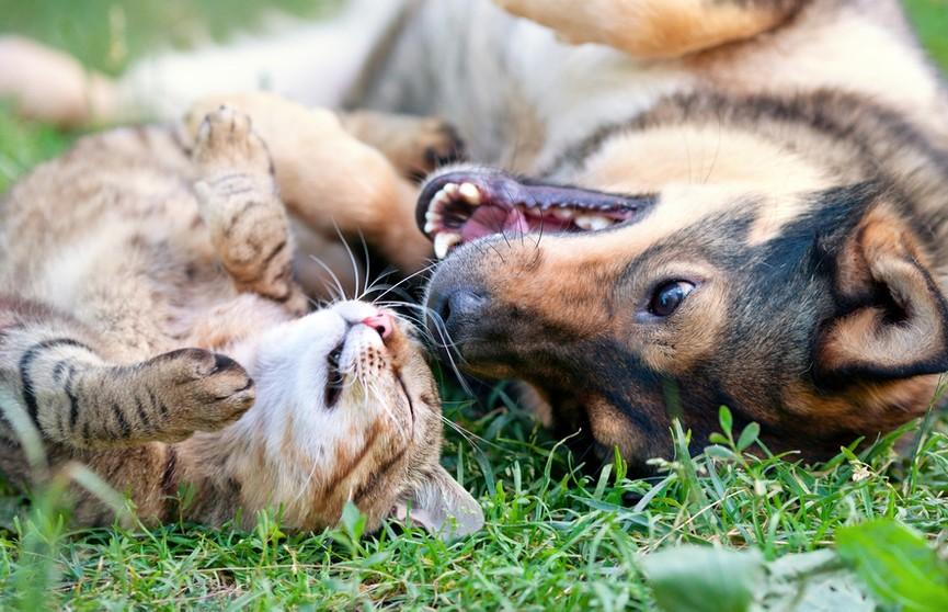 Собака хочет поиграть с котом или обижает его? Мнения пользователей соцсети разделились. А вы как думаете? (ВИДЕО)