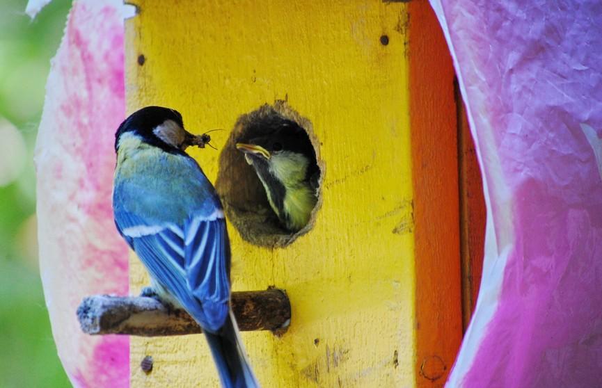 Столичный зоопарк объявил конкурс на создание лучшего домика для птиц