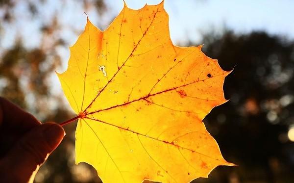 14 октября в Беларуси будет до +23°C