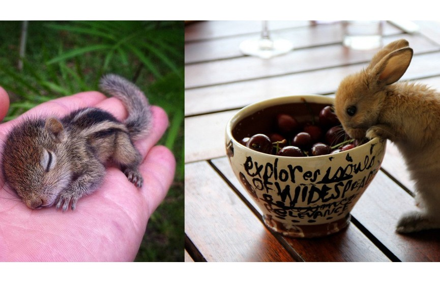Только родились, но уже могут украсть ваше сердечко. 10 фото милых детенышей-зверят. Как вам номер шестой?