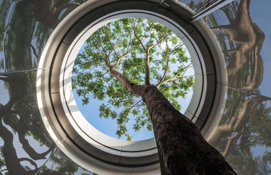 В Китае построили круглый музей с отверстием в крыше для дерева