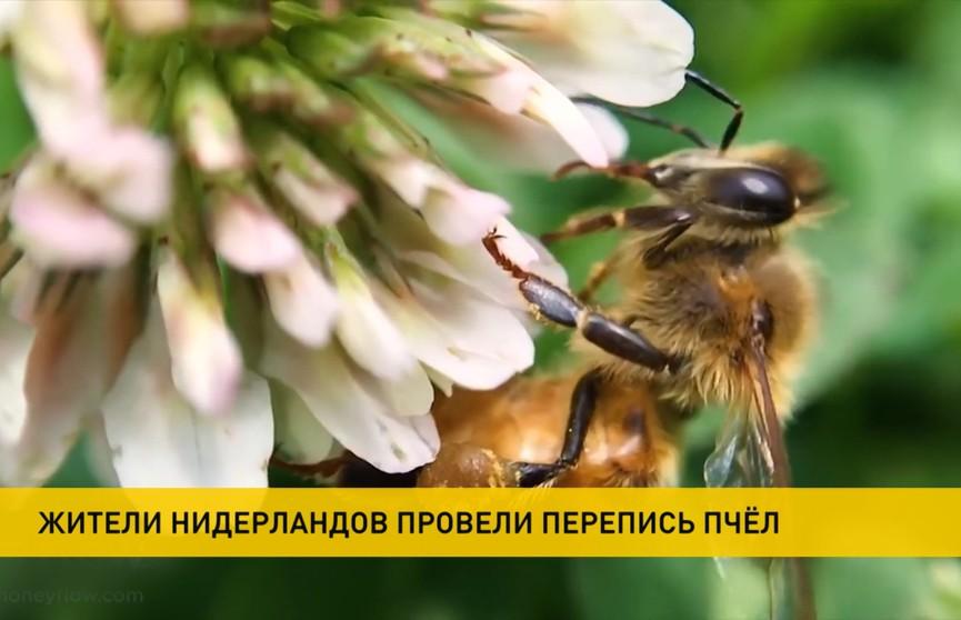 Национальную перепись пчел объявили власти Нидерландов