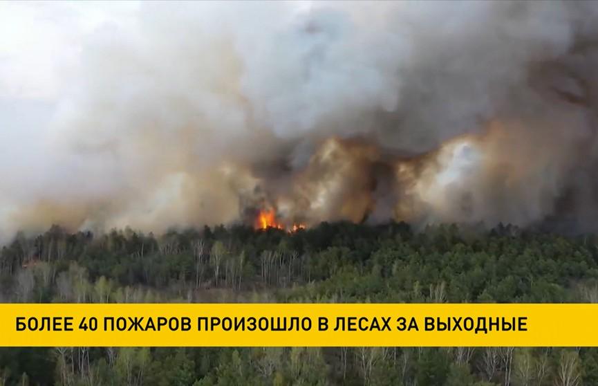 Более 40 пожаров произошло в белорусских лесах за выходные