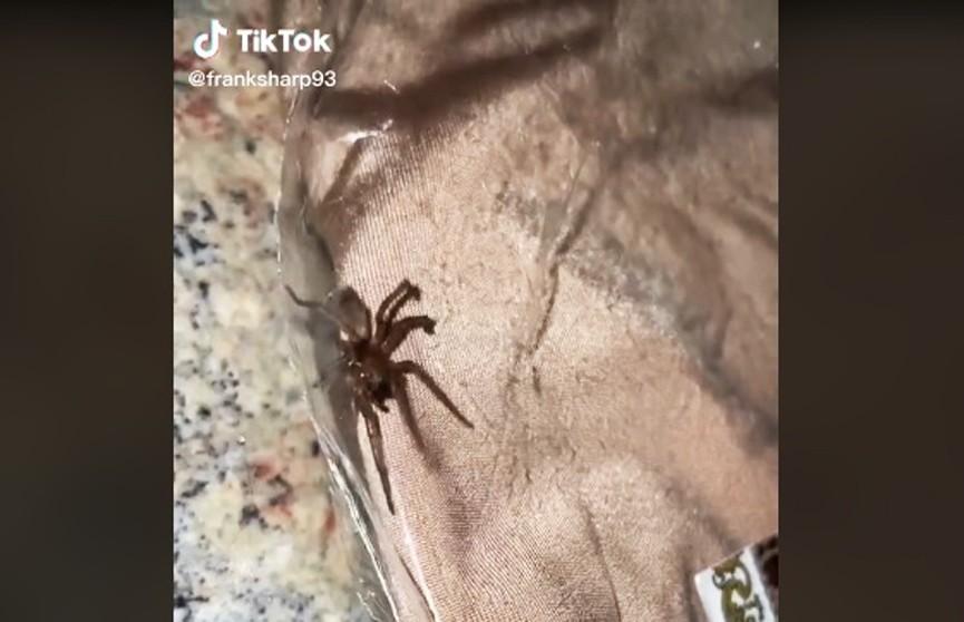 Девушка обнаружила паука в посылке от популярного бренда