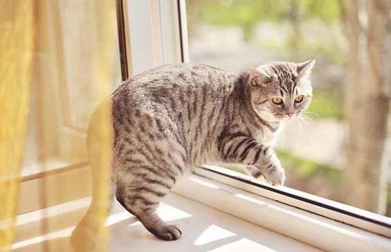 Кошка упала с 18-го этажа и уцелела