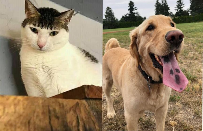 Они уникальны! 15 фотографий особенных кошек и собак, которые не оставят вас равнодушными
