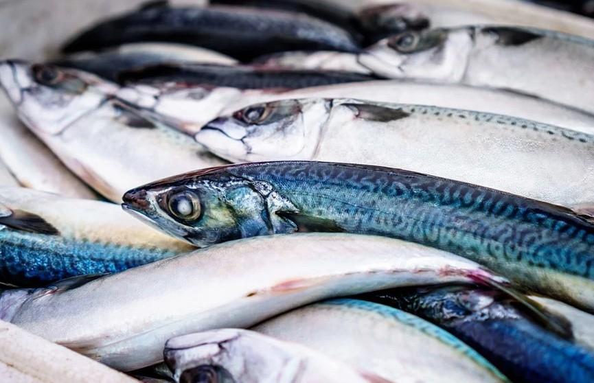 Мор рыбы зафиксировали в Минском районе