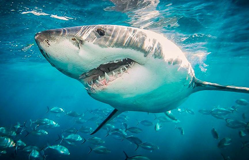 Акула едва не съела восьмилетнего мальчика в США (ВИДЕО)