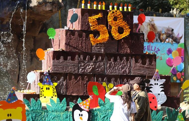 Слону на 58-летие подарили торт, который превзошёл размерами именинника