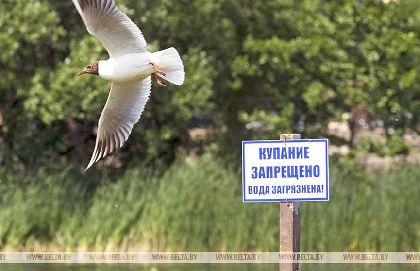 Санэпидслужба назвала места, где запрещено или ограничено купание