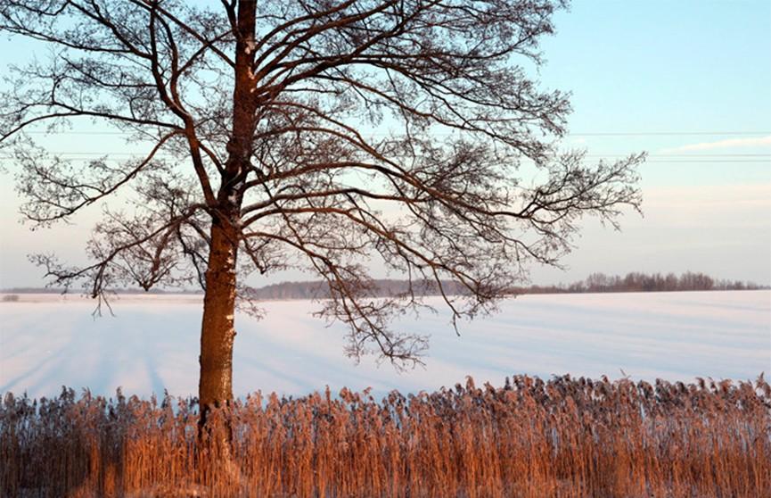 Сильный ветер, возможна метель: оранжевый уровень опасности объявлен в Беларуси на 7 марта