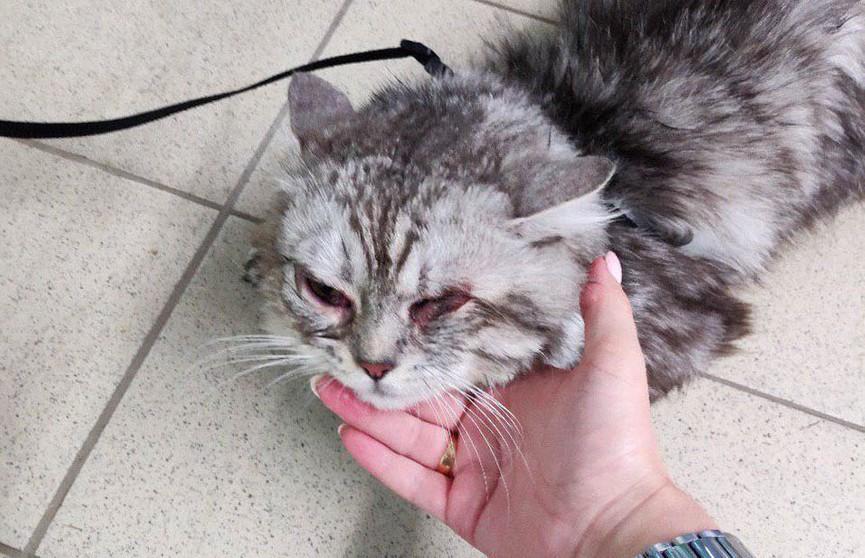 В Боровлянах пытаются спасти кота от издевательств хозяина