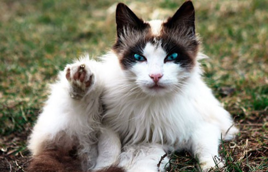 Благотворительная акция «Дорога домой!» поможет найти дом для более 60 кошек и собак