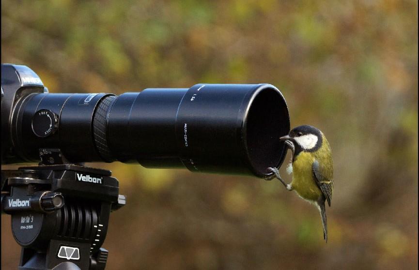 Фотоохота началась: чемпионат Беларуси по фотографированию птиц стартовал в Минске
