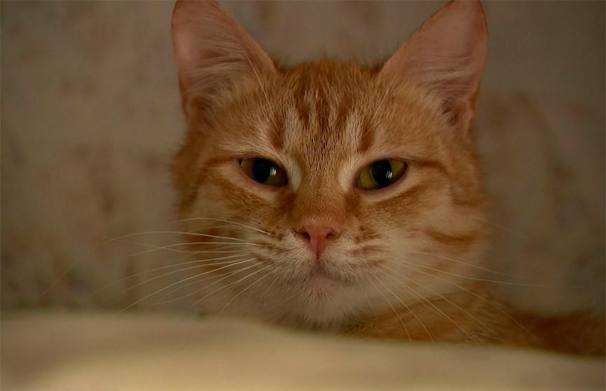 Как сократить численность уличных котов и легко помочь бездомным животным, даже если вы не можете их приютить?