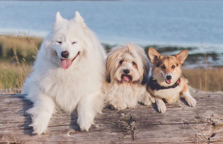 10 самых популярных собак из Instagram, у которых миллионы подписчиков
