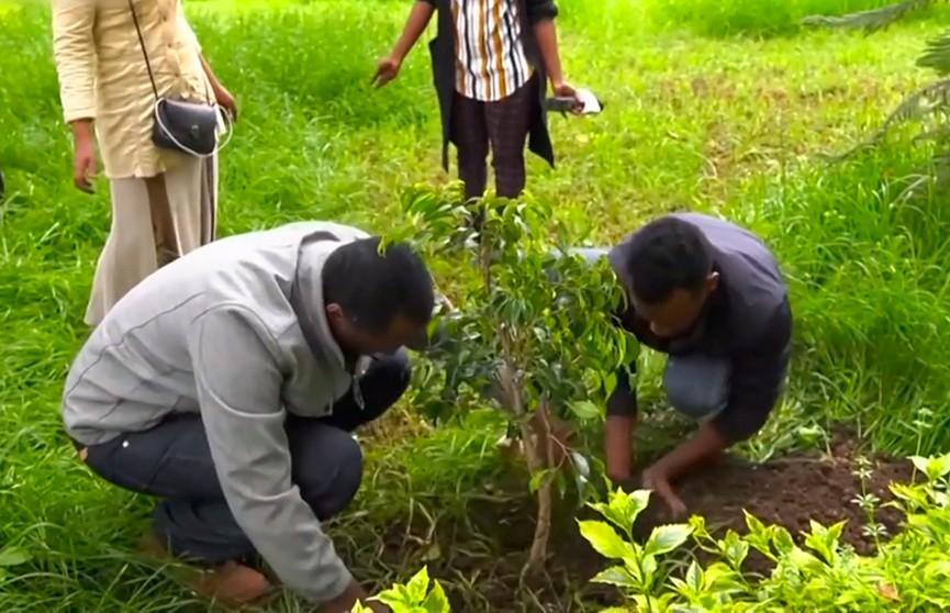 Мировой рекорд: 350 миллионов деревьев высадили за 12 часов в Эфиопии