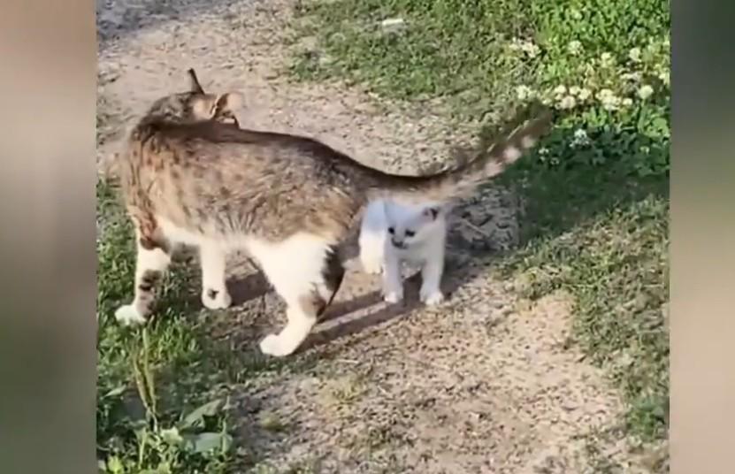 «Не, я лучше обратно»: мама-кошка вынесла котенка в мир, но он решил, что дома было лучше