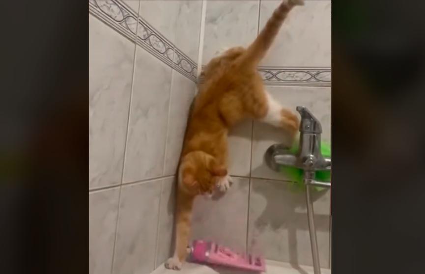 «Задний ход – вообще шедевр»: смешные попытки кота не упасть в ванну с водой рассмешили Сеть – эти кадры стоит увидеть!
