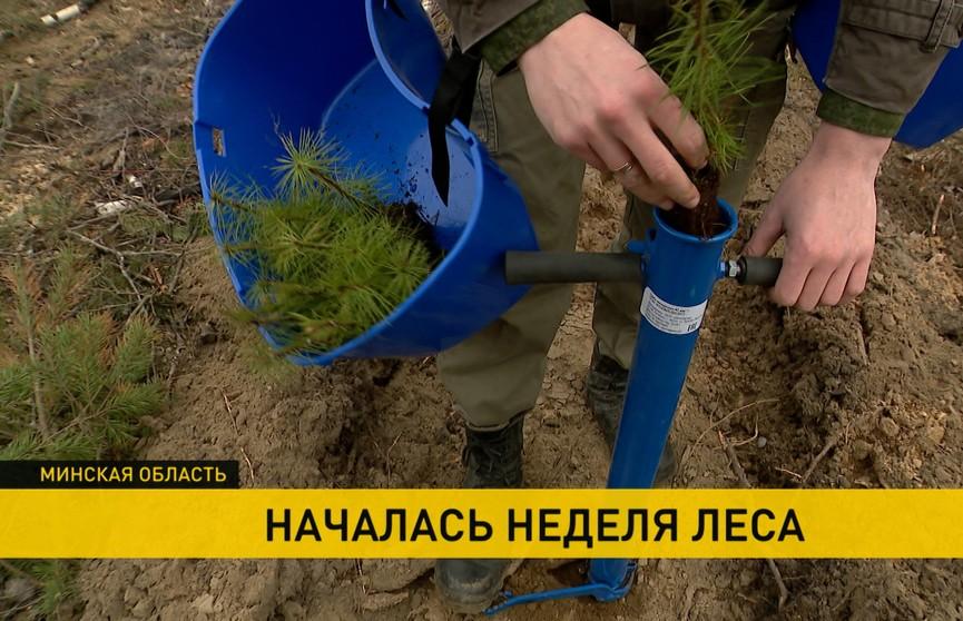 «Неделя леса»: люди  разных профессий, возрастов, интересов  высаживают деревья  в регионах Беларуси