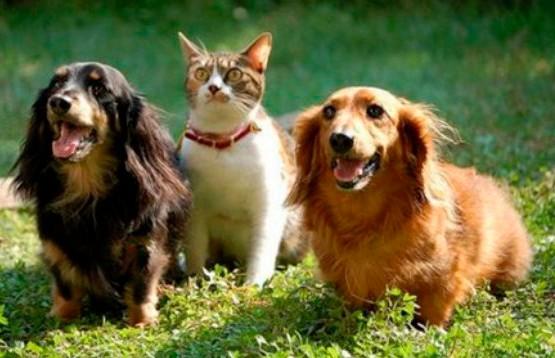 Любят ли своих хозяев кошки и собаки или живут с ними только из-за еды?