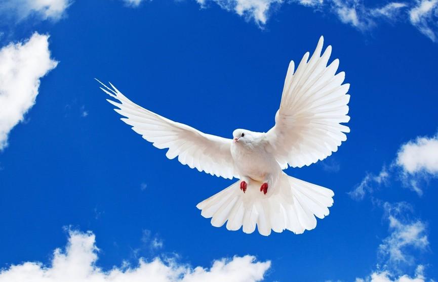 Голубь «завис» в полете и озадачил Сеть (ВИДЕО)