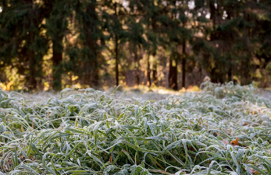 Первые заморозки ожидаются в ночь с 23 на 24 сентября